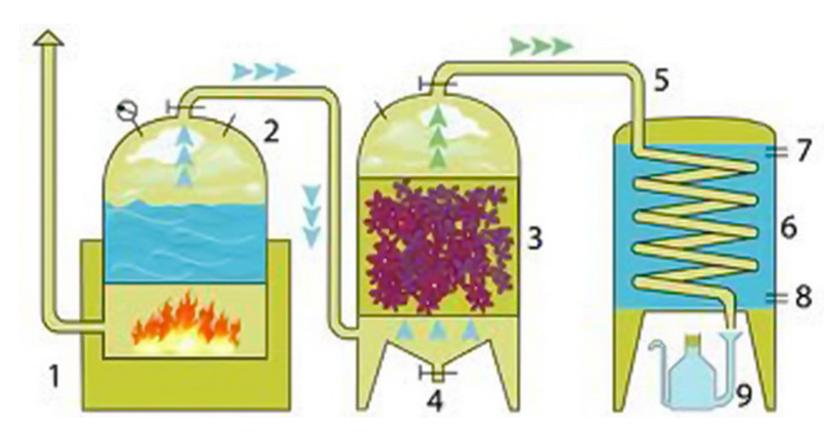 Chưng cất tinh dầu sả với thiết bị chưng cất có nồi hơi riêng