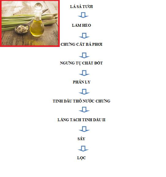Hướng dẫn quy trình chưng cất tinh dầu sả